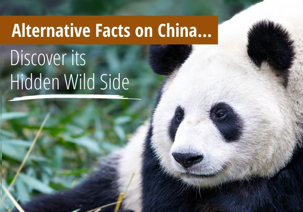 Discover China's Hidden Wild Side