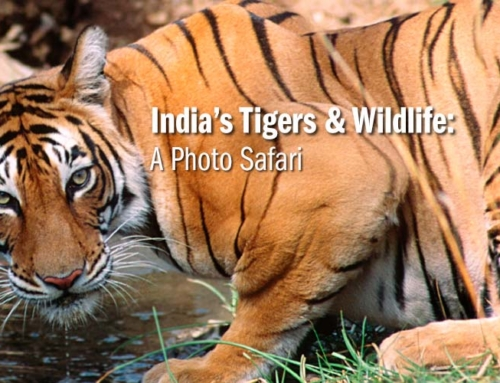 India's Tigers & Wildlife: A Photo Safari